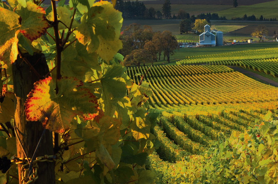 Pinot Noir Comes Of Age In Oregon S Willamette Valley